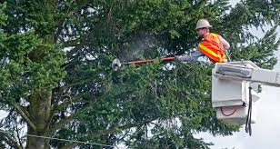 A man in an orange & yellow safety vest in a white bucket cutting limbs from a tree