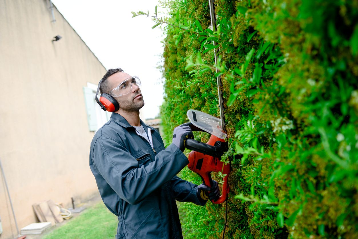 A man with safety glasses & ear muffs, a blue jumper cutting the hedges with a trimmer